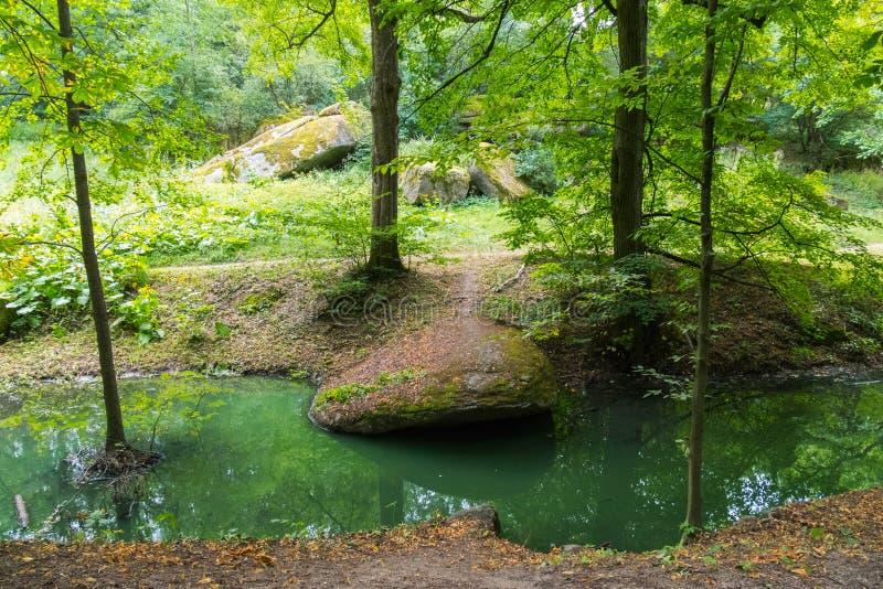 Tajemnicza łąka w lesie z skałami posypywać nad mechatymi drzewami i strumieniem zieleń chaotycznych, ampuły, nawadnia spływanie fotografia stock