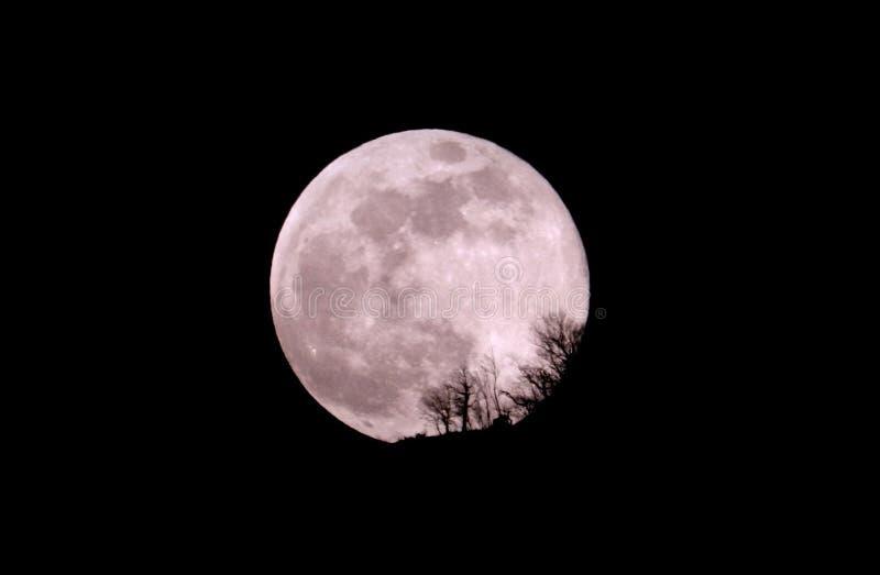 Tajemnicza i mistyczna księżyc zdjęcie royalty free