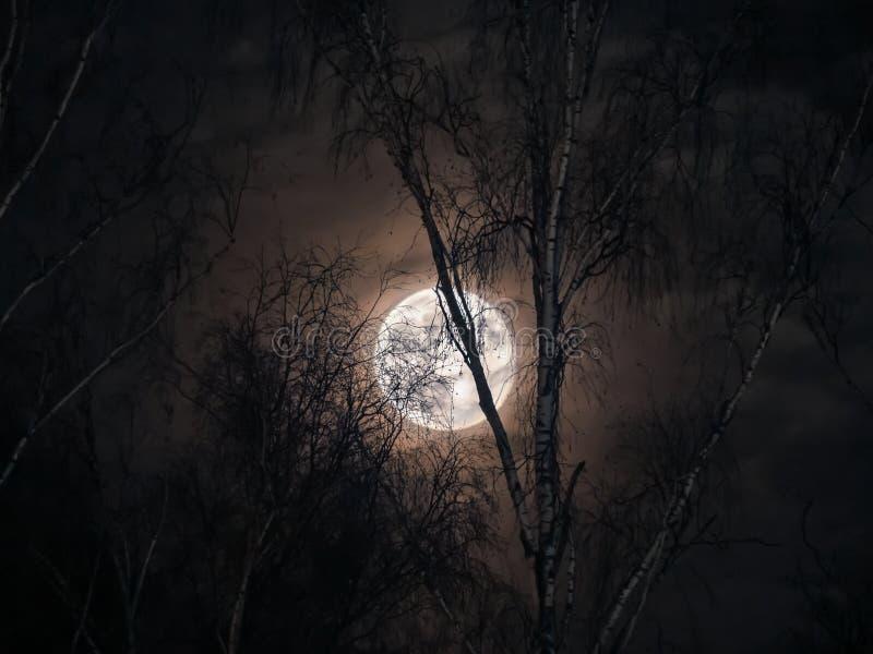 Tajemnicza księżyc w pełni za nagimi gałąź obrazy royalty free