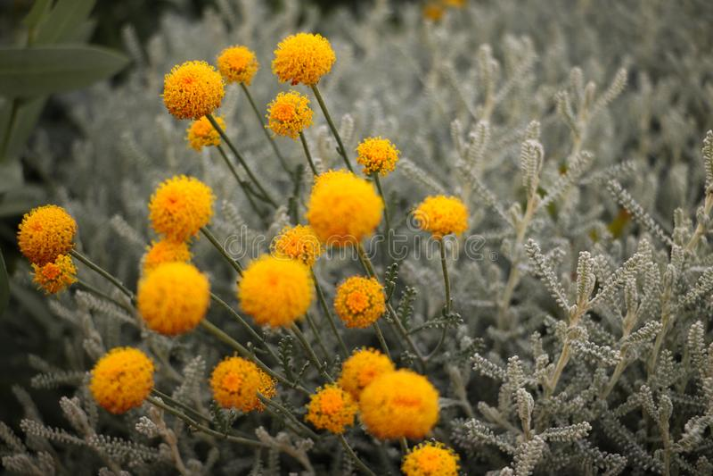 Tajemnicze lato rośliny obraz stock