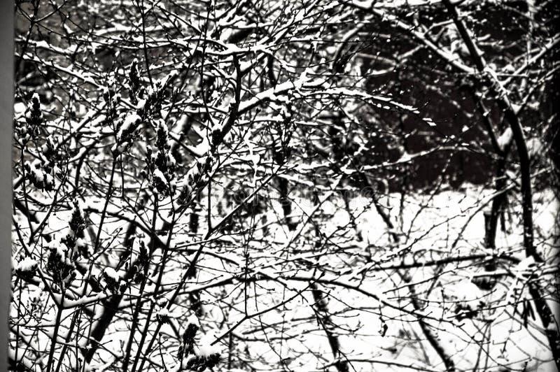 Tajemniczej zimy surowy las zdjęcie royalty free