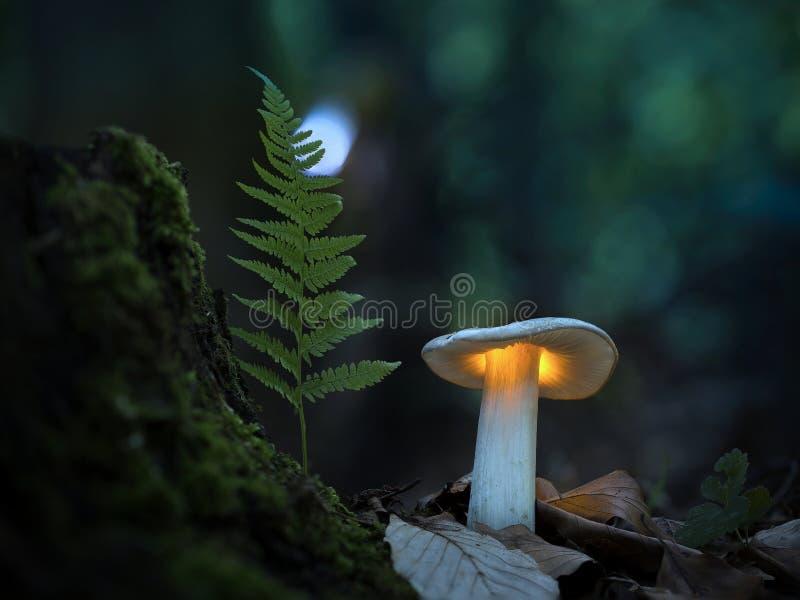 Tajemniczy świat grzybów obrazy stock