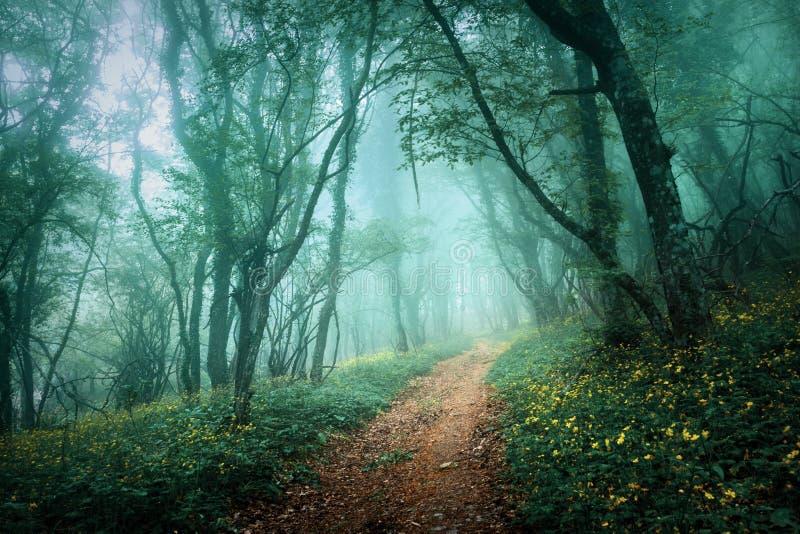 Tajemniczy ciemny las w mgle z kwiatami i drogą zdjęcie stock
