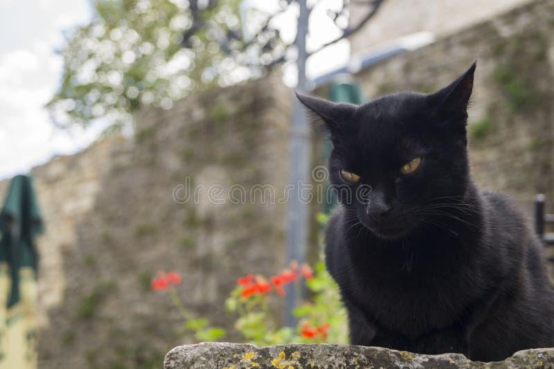 Tajemniczy czarny kot zdjęcie royalty free