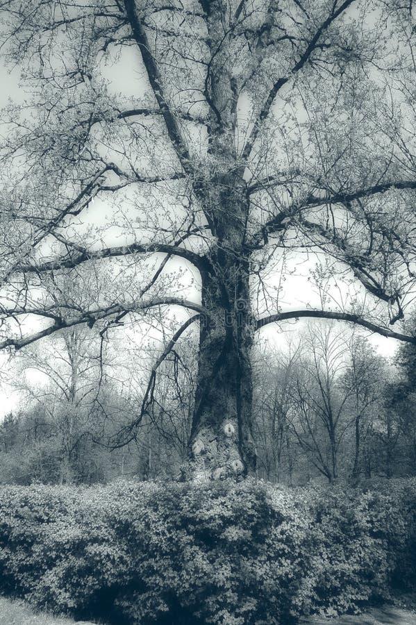 tajemniczy drzewo fotografia stock