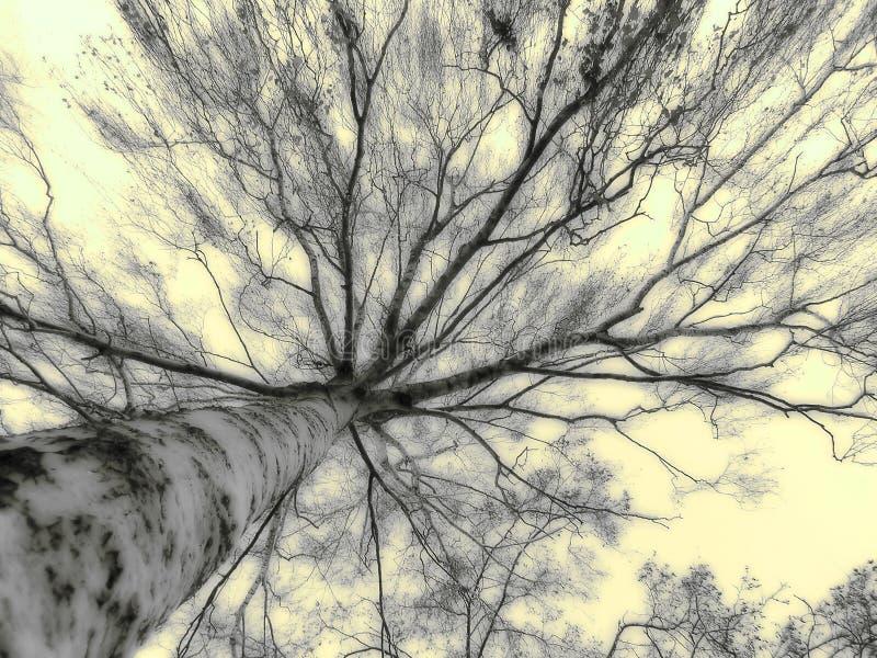 tajemniczy drzewo obraz stock