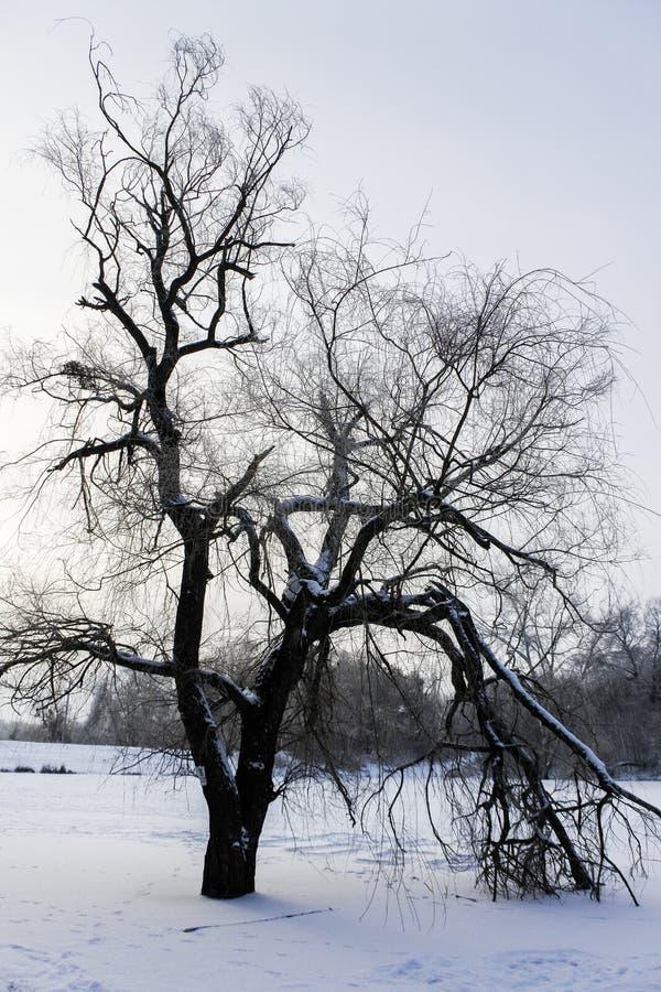 Tajemniczy drzewo na zamarzniętym jeziorze fotografia stock