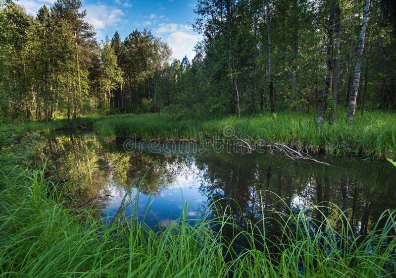 tajemniczy jezioro zdjęcia stock