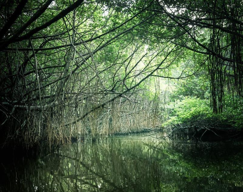 Tajemniczy krajobraz i surrealistyczny piękno dżungle Sri Lanka obrazy royalty free