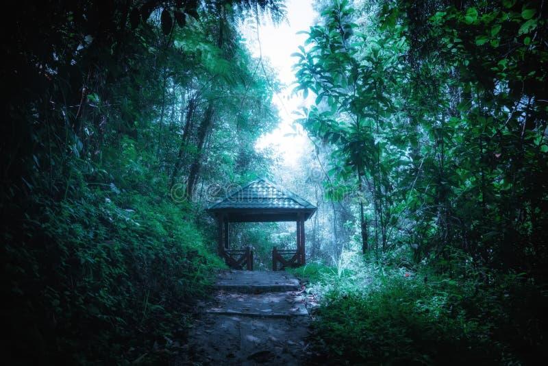 Tajemniczy krajobraz mgłowy las z ścieżka sposobem przez luksusowego i drewnianego pawilonu w tunelu fotografia stock