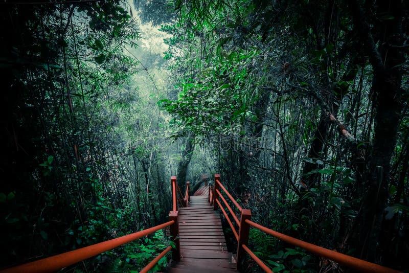 Tajemniczy krajobraz mgłowy las z drewnianym mostem obraz royalty free