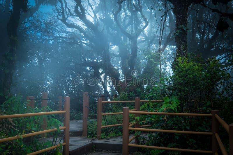 Tajemniczy krajobraz mgłowy las z drewnianym mostem fotografia stock