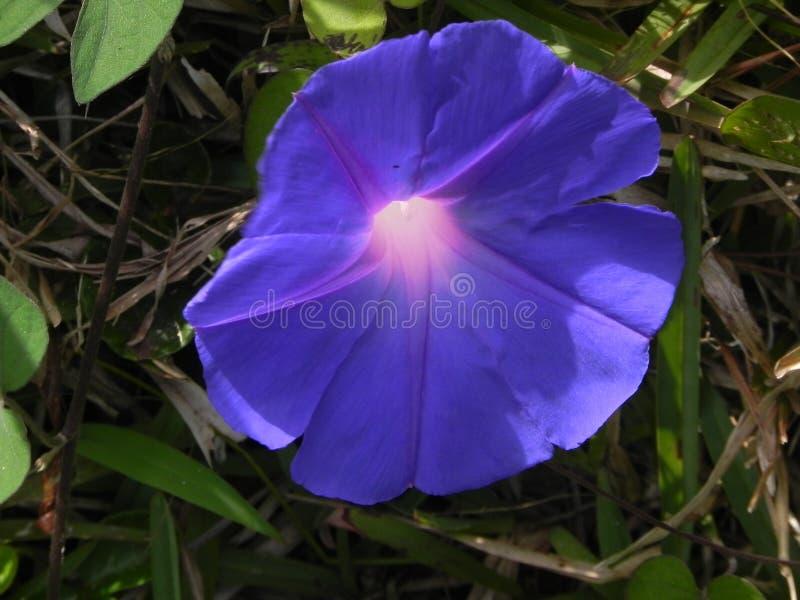Tajemniczy kwiat zdjęcia royalty free
