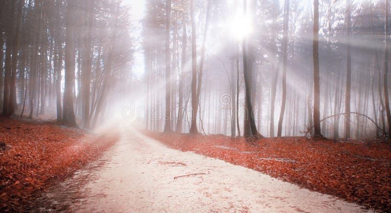 Tajemniczy lasowej drogi sunbeams krajobraz fotografia stock