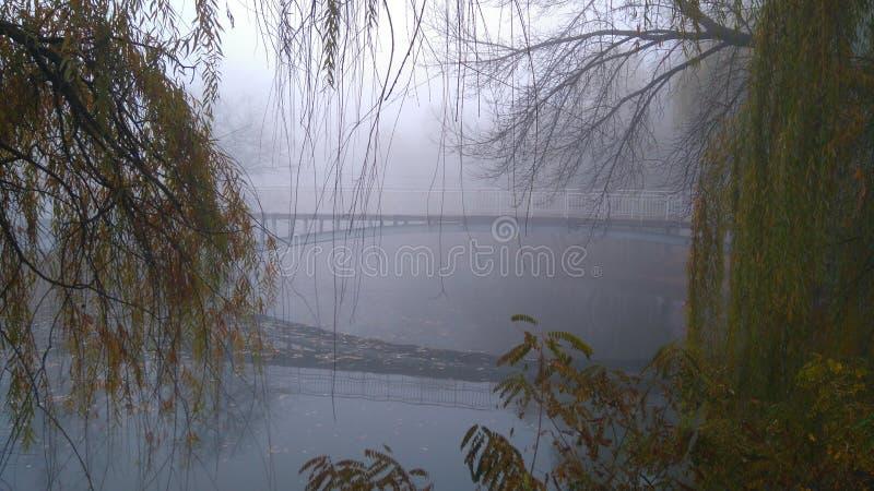Tajemniczy otaczanie Most w parku Zakrywający z mgłą i pięknem zdjęcie stock