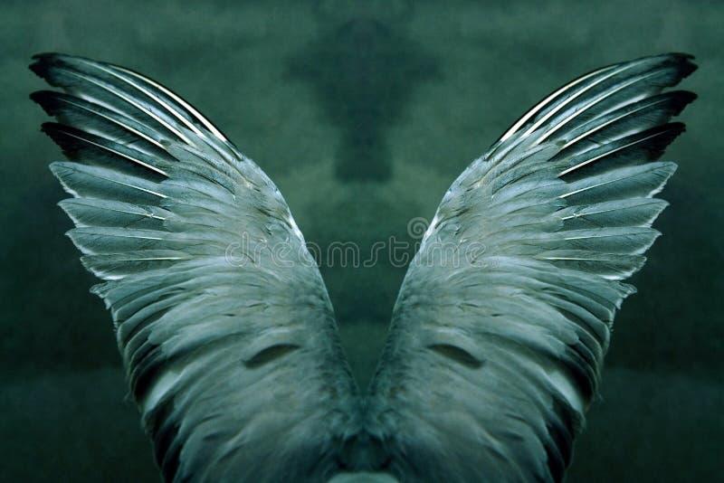 tajemniczy skrzydła zdjęcie stock