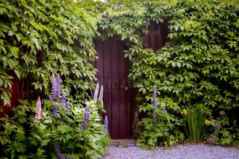 Tajemniczy wejście w ścianie z cegieł zakrywającej z zielonymi winogradami, obraz royalty free
