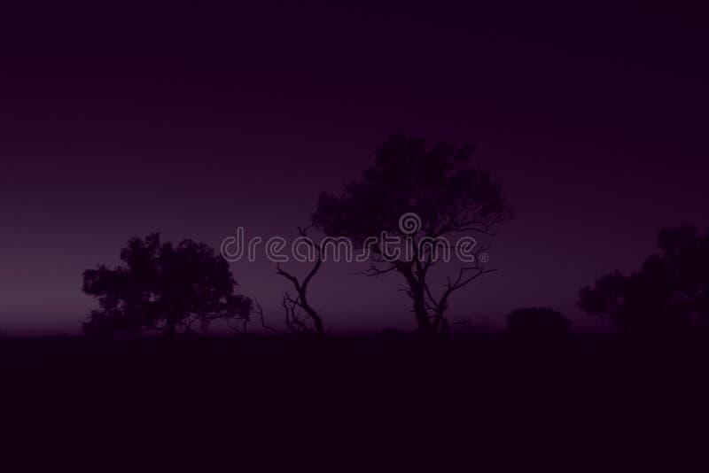 tajemniczy wschód słońca zdjęcia royalty free