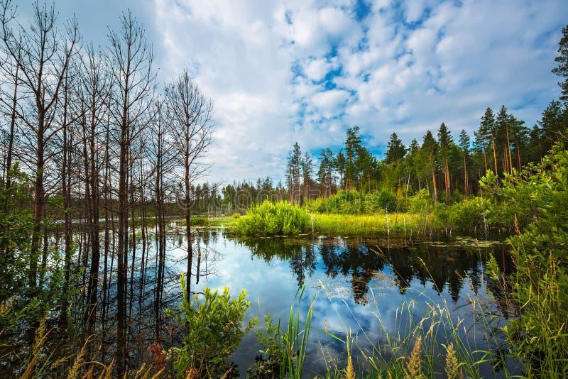 Tajga jezioro Syberia, Rosja obraz royalty free