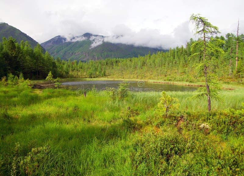 Tajga w sayan górach obrazy royalty free