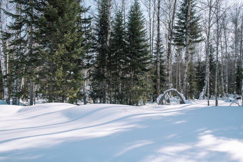 Tajga w zimie Las w zimie Zbliżenie zim lasowi Conifers pod śniegiem S obrazy royalty free