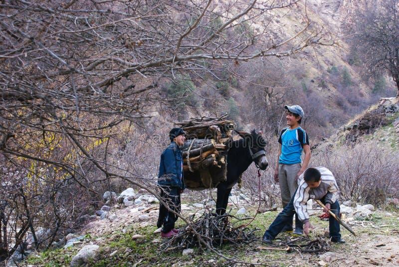 tajikistan Varzob 12 12 2010 För barn vedträt mot efterkrav och laddade det på en åsna royaltyfri bild