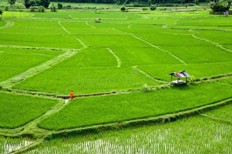 Tajlandia michaelita odprowadzenie na Rice gospodarstwie rolnym zdjęcie royalty free