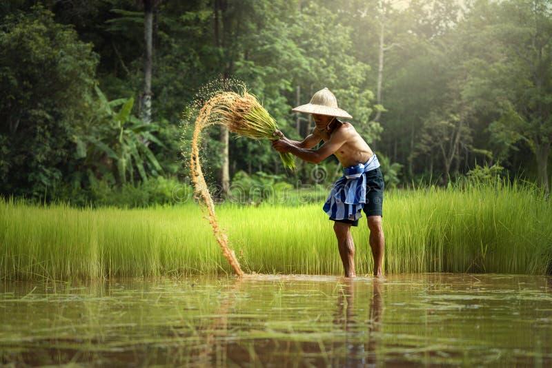 Tajlandzki Średniorolny działanie w uprawiać ziemię Z usunięciem fotografia royalty free