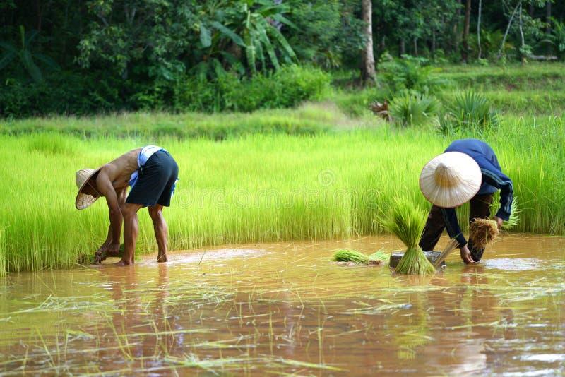 Tajlandzki Średniorolny Rodzinny działanie w uprawiać ziemię obraz royalty free