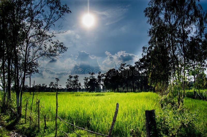 Tajlandzki Hom Mali Rice jeden świat fotografia stock