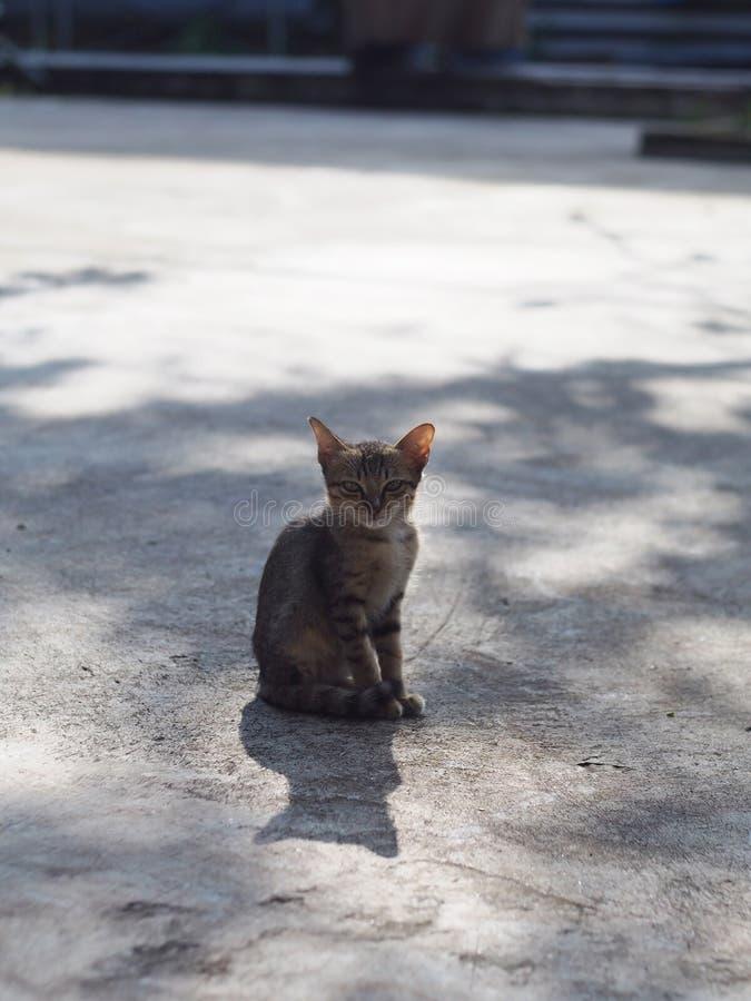 Tajlandzki kot przylega siedzieć na betonowej podłodze z światłem słonecznym Ranek dzień obrazy stock
