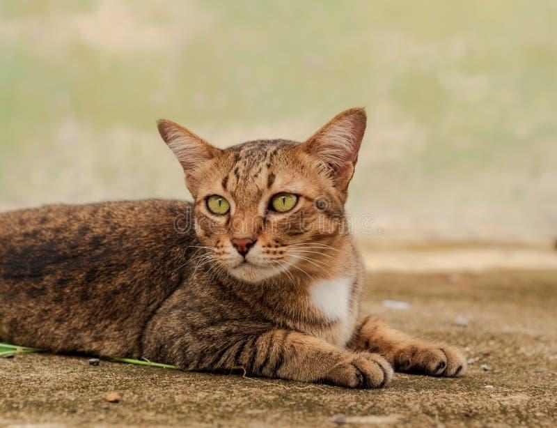 Tajlandzki kota wzór zdjęcie royalty free
