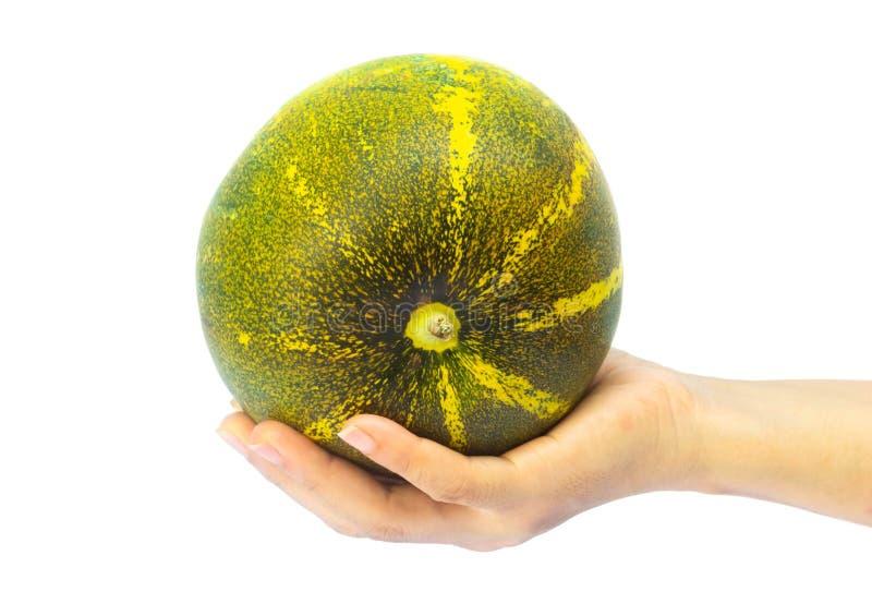 Tajlandzki melon lub kantalup w ręce odizolowywającej na białym tle zdjęcia royalty free