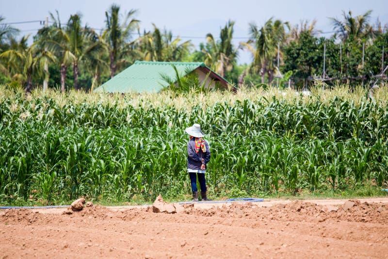 Tajlandzki rolnik stoi w polu uprawnym obrazy stock