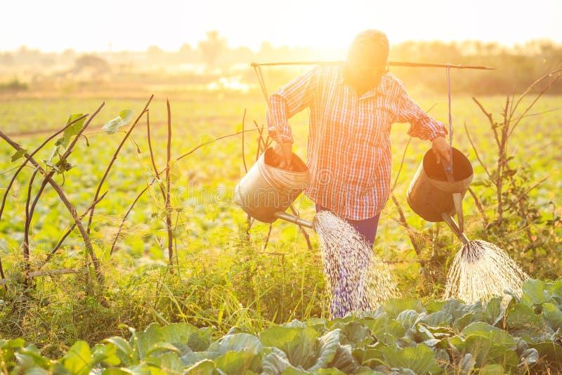 Tajlandzki rolnika lub ogrodniczki podlewanie w warzywa gospodarstwie rolnym z podlewaniem zdjęcia stock