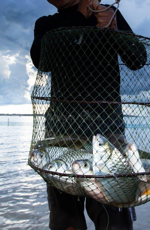 Tajlandzki rybak trzyma tłum duży błonia srebra barbet w rybiej sieci obraz stock