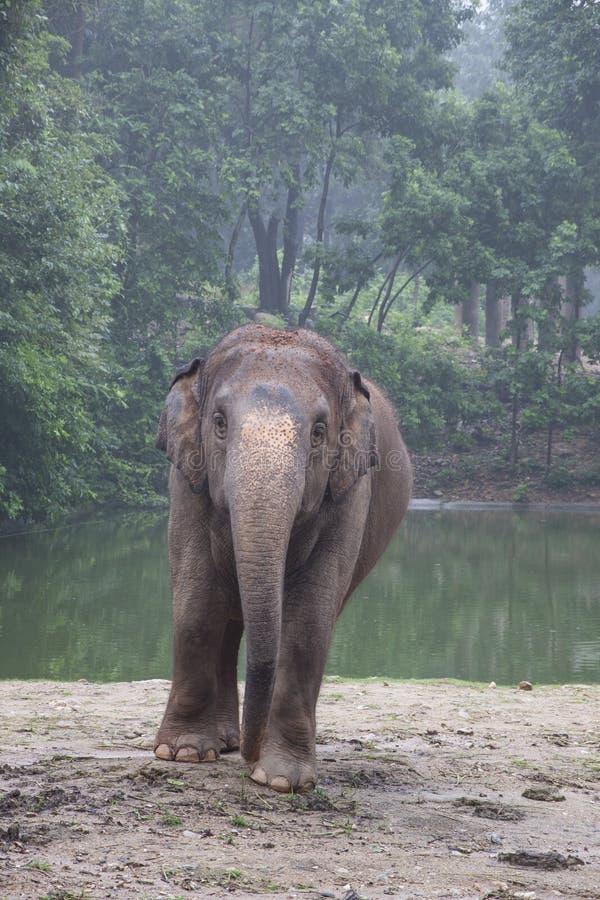 Tajlandzki słoń zdjęcia royalty free
