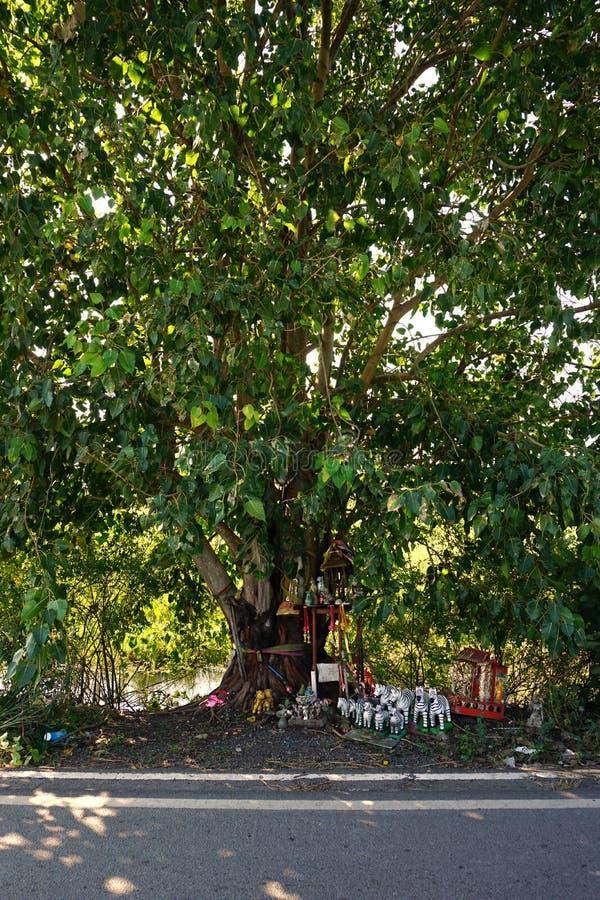 Tajlandzki wierzy w peepul drzewie zdjęcie stock