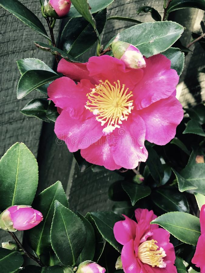 Tajnego ogródu piękno fotografia stock