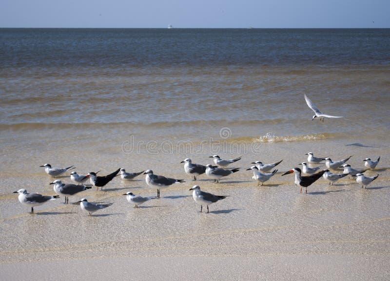 Tajni Seagulls? obrazy stock