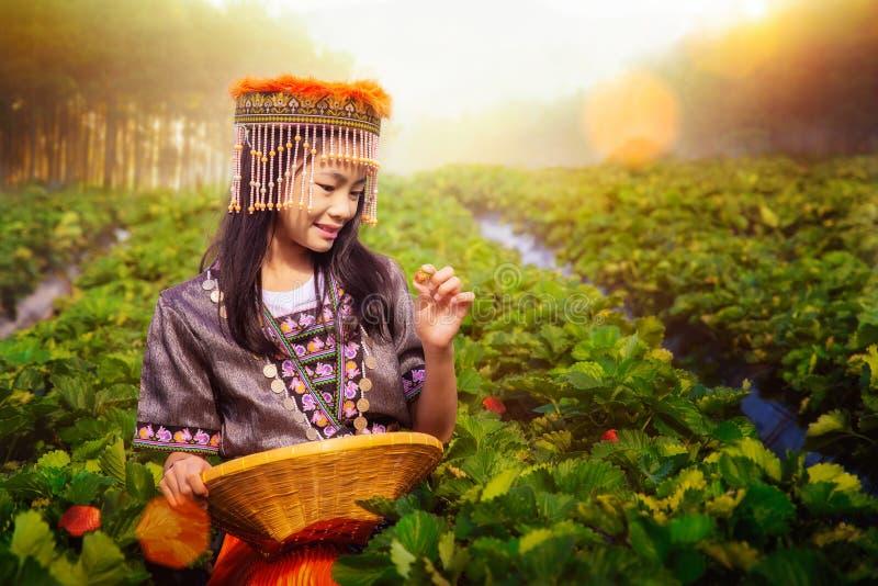 Tajska dziewczyna w tradycyjnej sukience chiang mai pracująca na farmie truskawek zdjęcia stock