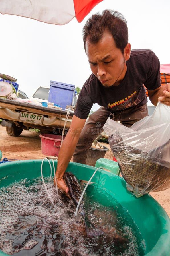 tajski rynku zdjęcie stock