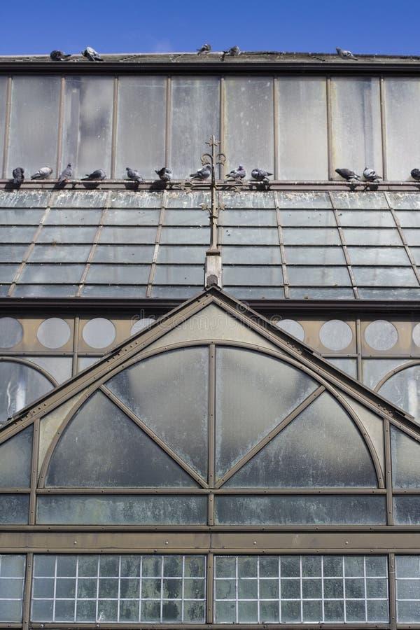 Tak av botanisk trädgårdglashuset royaltyfria foton