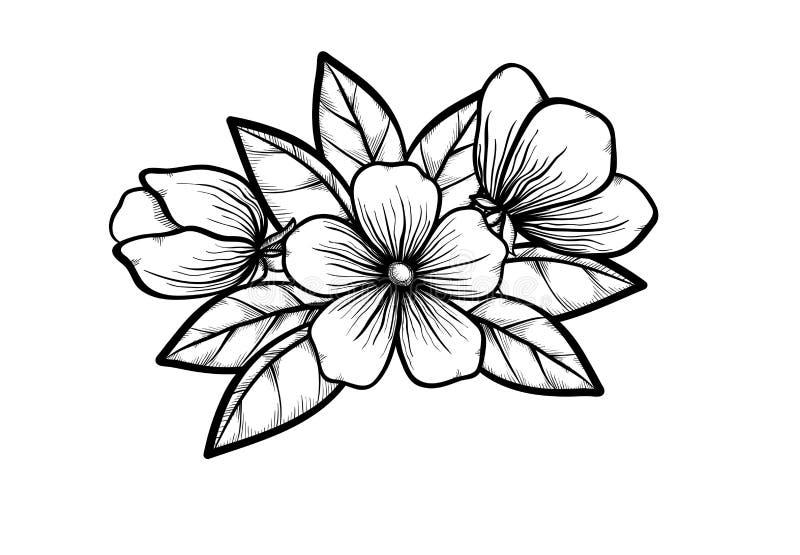 Tak die van tot bloei komende boom in grafische zwarte witte stijl, met de hand trekken. Symbool van de lente vector illustratie