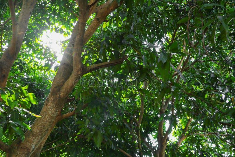 Tak en blad van boom en zonneschijn lichte eerlijke mooi in de bos achtergrondbodemmening het milieu van de conceptenwereld dag S royalty-vrije stock foto's