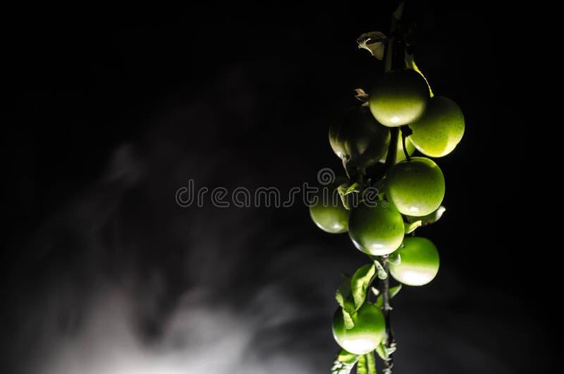 tak met dichte omhooggaand groene van de kersenpruim (Alycha) op een donkere achtergrond met rookeffect De de lentetijd… nam blad royalty-vrije stock afbeeldingen