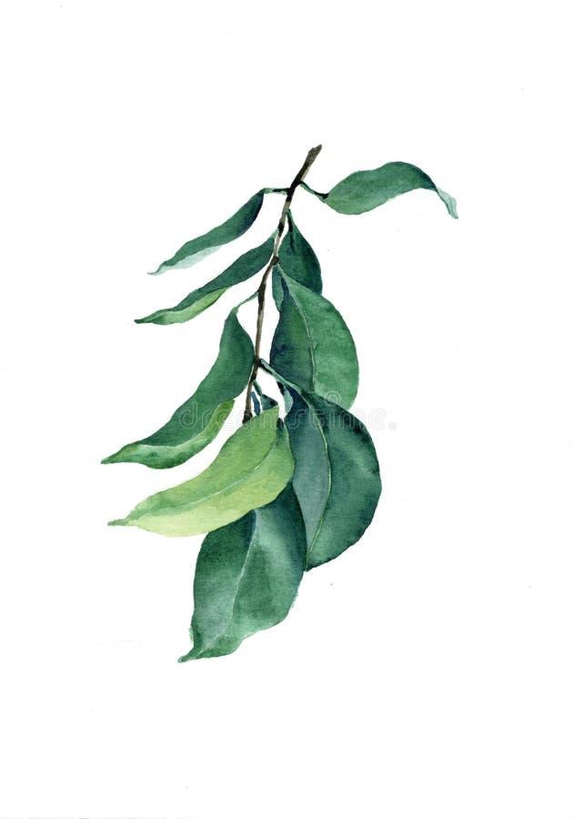 Tak met groene bladeren royalty-vrije stock foto