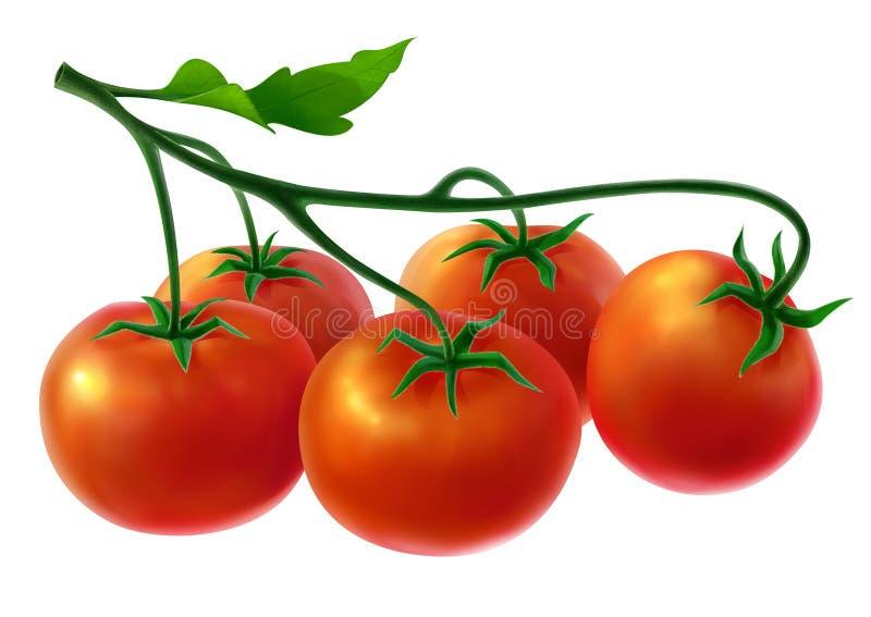 Tak met verse tomaten royalty-vrije illustratie