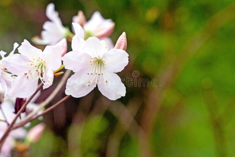 Tak met witte bloemen tegen groene grasachtergrond stock foto