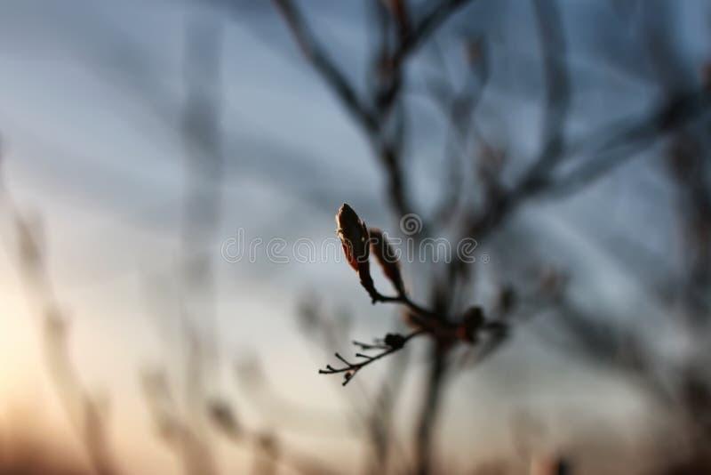 Download Tak Op De Lentezonsondergang Stock Afbeelding - Afbeelding bestaande uit close, zwart: 107708995